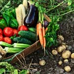 Is Eating Organic Really Safer? article thumbnail