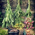 Is Herbal Medicine The Way To Go article thumbnail